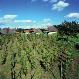 Wine in Southern Moravia