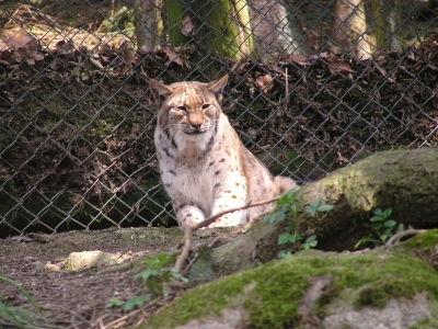 Wildpark Altenfelden