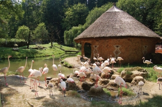 An Excursion to See Animals Not Only in the ZOO